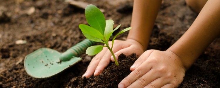 Peacemakers Planting in Peace
